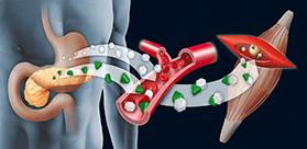 Anabolismo e Catabolismo: Compreender o metabolismo é fundamental para o ganho de massa!
