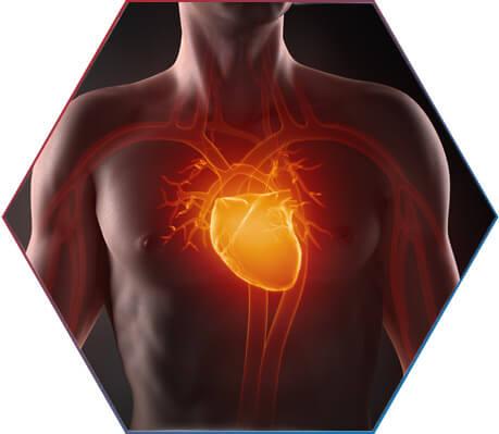 Beneficia o sistema cardiorrespiratório