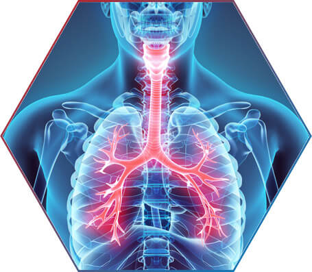 Muay Thai e o sistema cardiorrespiratório